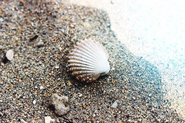 Shell by TihanaPhotography