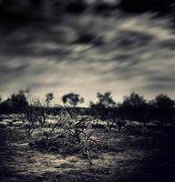 NightFall by Sortvind