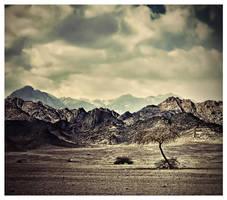 Journey by Sortvind
