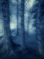 Lothlorien by Sortvind