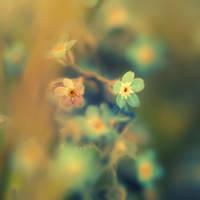 Dreams by Sortvind