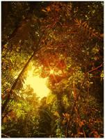 Rainforest by Sortvind