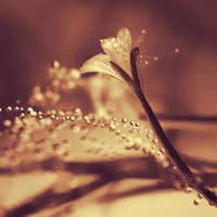 Soft Dreams by Sortvind