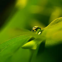 Photosynthesis by Sortvind