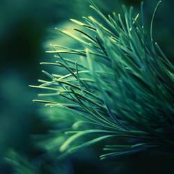 Chlorophyta by Sortvind