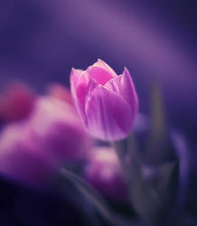 Romance by Sortvind