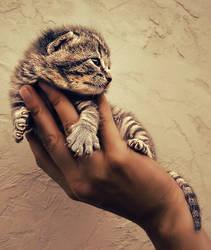 Lion King by Sortvind
