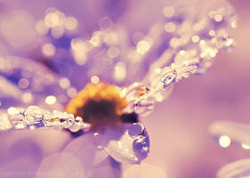 Life is Beautiful by Sortvind