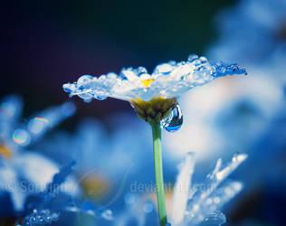 Beautiful Dreams by Sortvind
