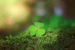 Lucky Charm by Sortvind
