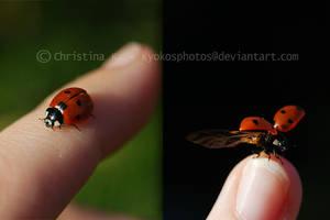 Ladybugs Life I by kyokosphotos