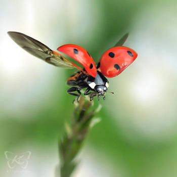 fly away by kyokosphotos