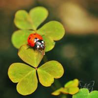 lucky charm by kyokosphotos