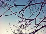 Tree by siqna333