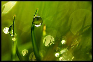 Drops by abhinavsah