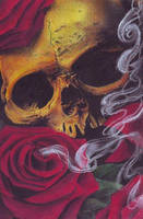 Skull in pastel by cigla