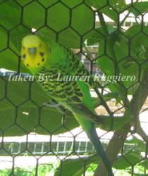 Green Budgie by LoreSakurachan