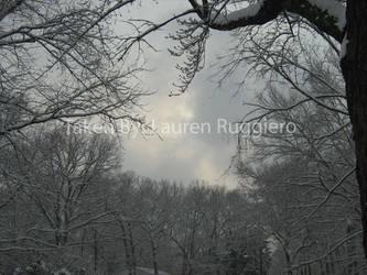 Snow on trees 2011 by LoreSakurachan