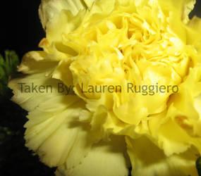 Light Yellow Flower by LoreSakurachan