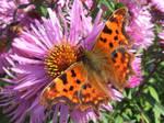 Butterfly 2 by TimeWizardStock