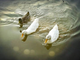 little friends by duckpondevans