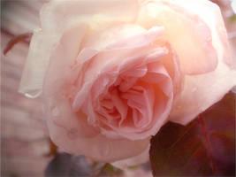 spring pink by duckpondevans