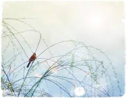willow by duckpondevans