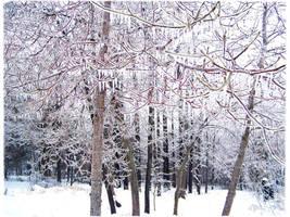 snow in Missouri by duckpondevans