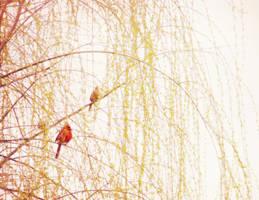 spring morning by duckpondevans