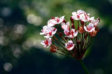 flower by llovegood
