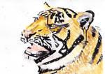 Tiger by Cloverperidot
