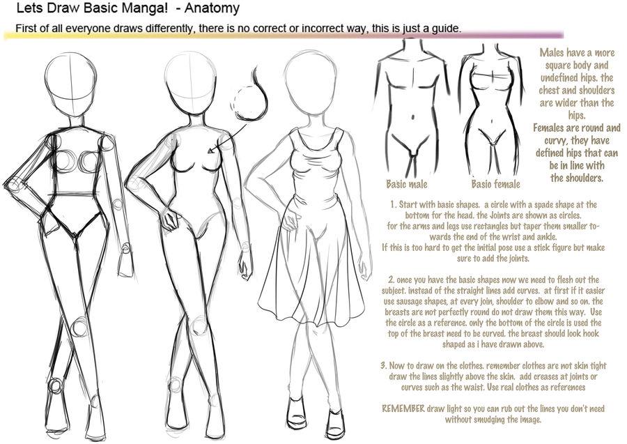 Basic Manga Anatomy Tutorial By Hoshi Kou On Deviantart