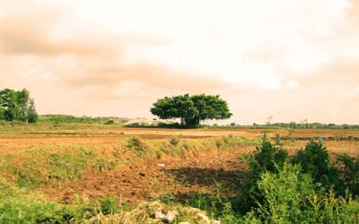 Lone Baniyan by raghulmz