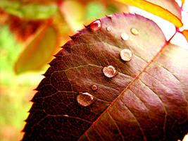 Rain Leaf Vrs 2 by nina15r