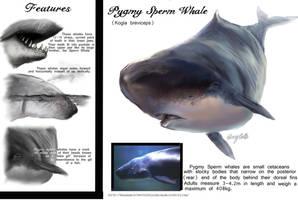 Pygmy Sperm Whale by Ebonenee