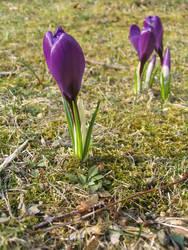 spring has sprung by kneesocks