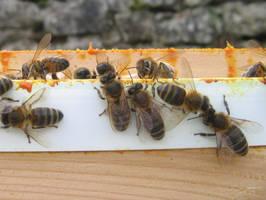 Bees I by korenwolf