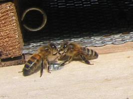 Bees II by korenwolf