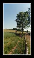 Somerset in Summer by korenwolf