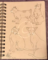 Lilly-Lamb Sketchbook 2018 Part 19 by Lilly-Lamb
