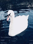 Royal Beauty by SerenityLightForce