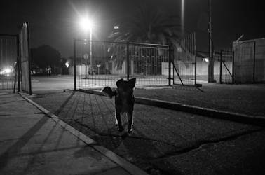 Day 24:  Dog at Ravensmead by AfricanObserver