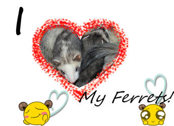 I love my ferrets!!! by VixieWolfLeo1990