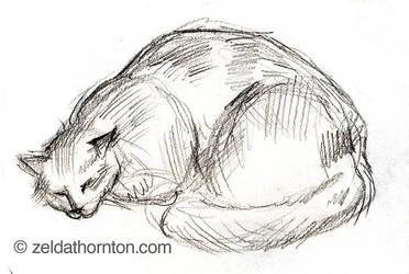 Cat study in pencil by zeldat