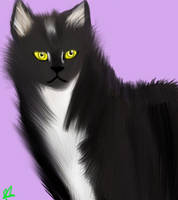 Realistic cat 2 by Roseyyandco