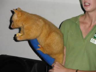 Fox? by southernmari