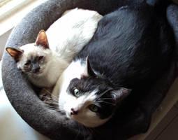 Lili and Zuko sleeping by Talty