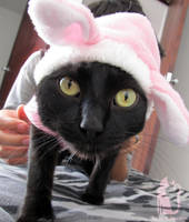 Black cat in pink bunny suit by Talty