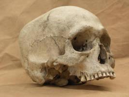 Human skull 10 jpeg by Pronus