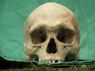 Human Skull 48 by Pronus
